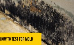 How-To-Test-For-Mold